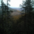 View over forest