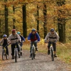 Cyclists in the forest