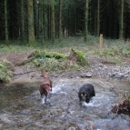 Dogs enjoy the water
