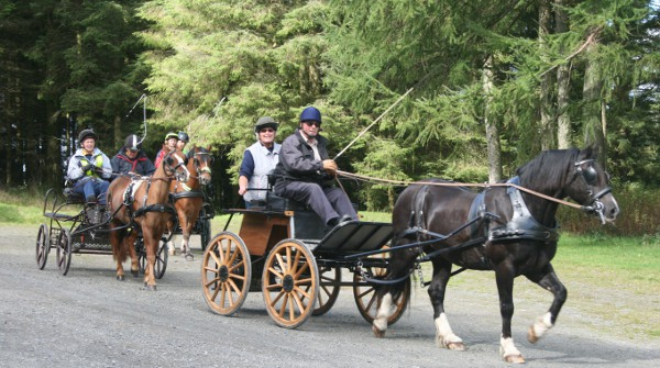 Carriage driving in Crychan Forest
