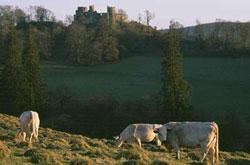 Dinefwr Park and Dinefwr Castle